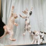 子猫が網戸に飛びついている写真